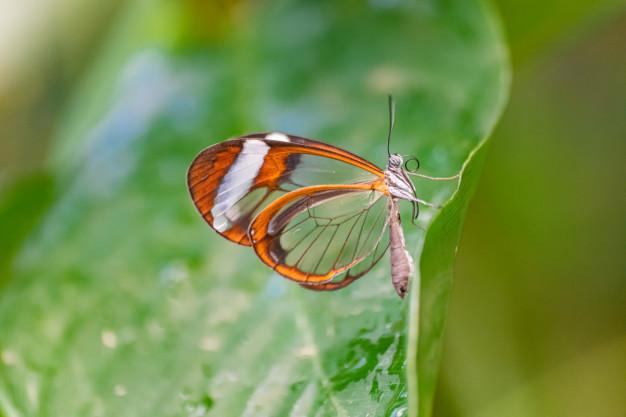 farfalla e biodiversita